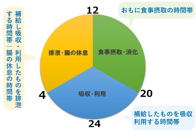 規則的な食事と消化の時間帯円グラフ